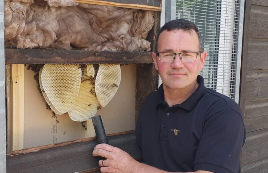 ABM Pest Control Mansfield - Bee removal